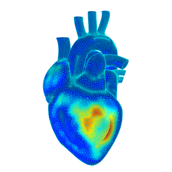heart simulation
